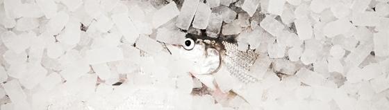 bild2-fiskelyckan
